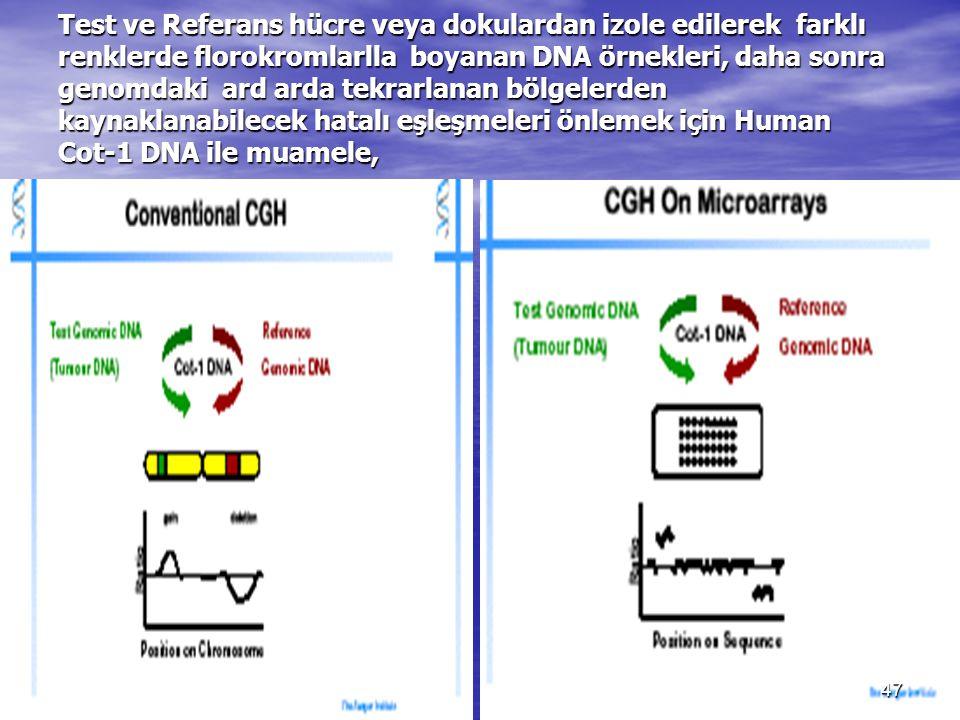 Test ve Referans hücre veya dokulardan izole edilerek farklı renklerde florokromlarlla boyanan DNA örnekleri, daha sonra genomdaki ard arda tekrarlanan bölgelerden kaynaklanabilecek hatalı eşleşmeleri önlemek için Human Cot-1 DNA ile muamele,