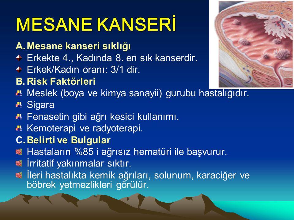 MESANE KANSERİ A. Mesane kanseri sıklığı