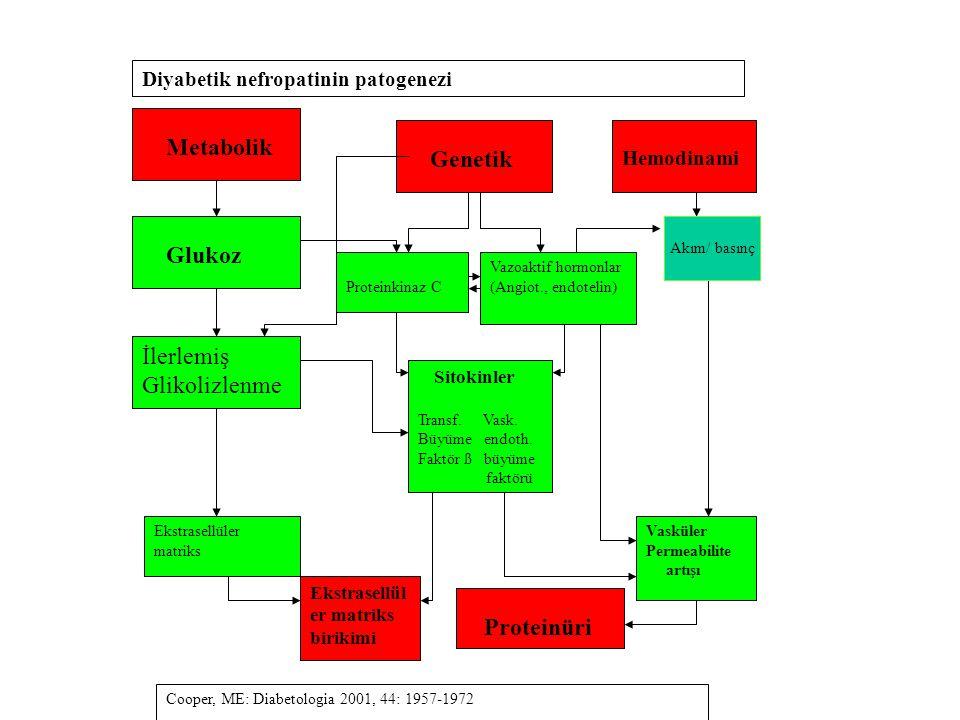 Metabolik Genetik İlerlemiş Glikolizlenme Proteinüri