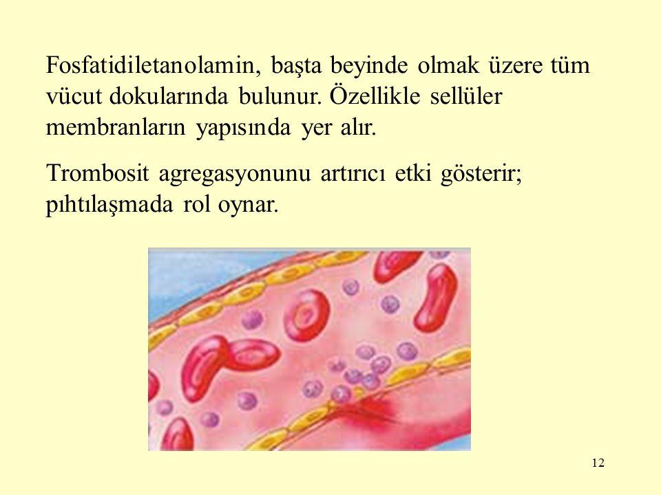 Fosfatidiletanolamin, başta beyinde olmak üzere tüm vücut dokularında bulunur. Özellikle sellüler membranların yapısında yer alır.