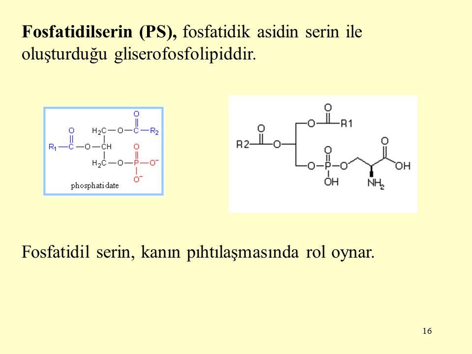 Fosfatidilserin (PS), fosfatidik asidin serin ile oluşturduğu gliserofosfolipiddir.