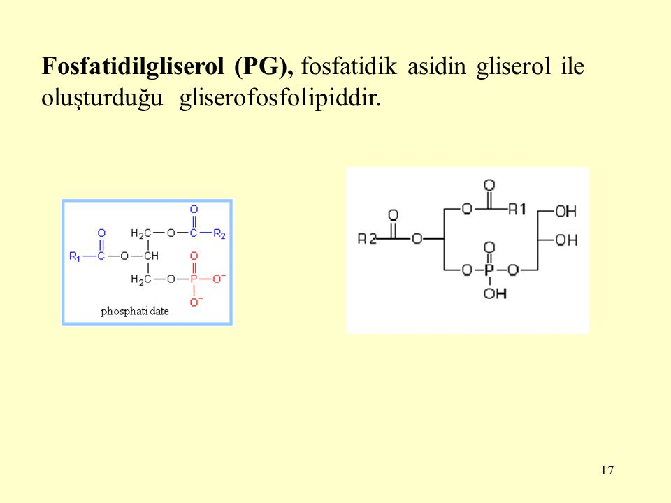 Fosfatidilgliserol (PG), fosfatidik asidin gliserol ile oluşturduğu gliserofosfolipiddir.