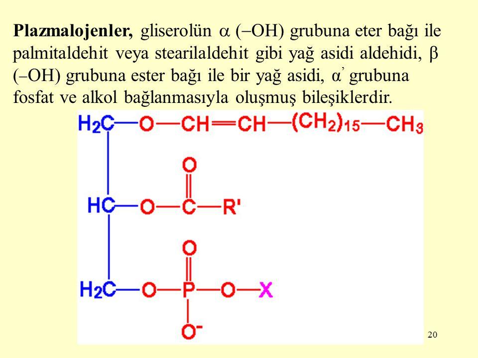 Plazmalojenler, gliserolün  (OH) grubuna eter bağı ile palmitaldehit veya stearilaldehit gibi yağ asidi aldehidi, β (OH) grubuna ester bağı ile bir yağ asidi, α' grubuna fosfat ve alkol bağlanmasıyla oluşmuş bileşiklerdir.