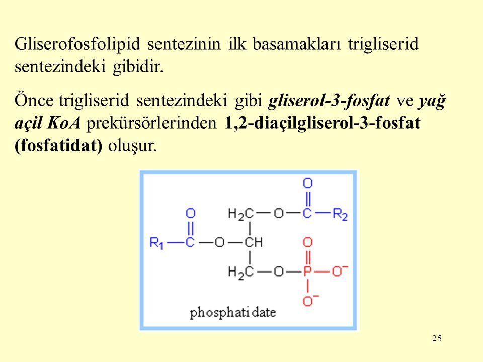 Gliserofosfolipid sentezinin ilk basamakları trigliserid sentezindeki gibidir.