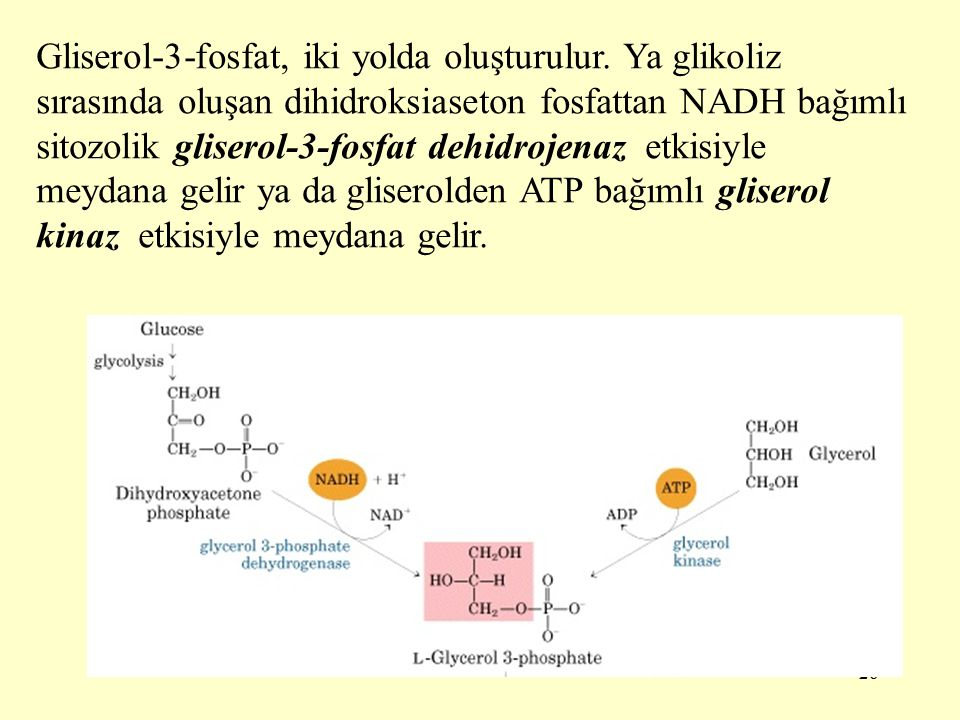 Gliserol-3-fosfat, iki yolda oluşturulur