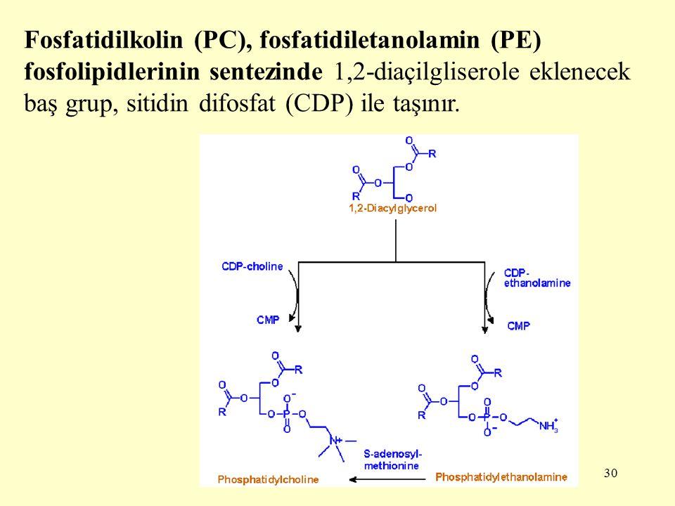 Fosfatidilkolin (PC), fosfatidiletanolamin (PE) fosfolipidlerinin sentezinde 1,2-diaçilgliserole eklenecek baş grup, sitidin difosfat (CDP) ile taşınır.