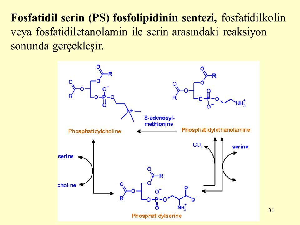 Fosfatidil serin (PS) fosfolipidinin sentezi, fosfatidilkolin veya fosfatidiletanolamin ile serin arasındaki reaksiyon sonunda gerçekleşir.