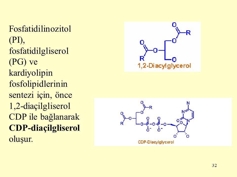 Fosfatidilinozitol (PI), fosfatidilgliserol (PG) ve kardiyolipin fosfolipidlerinin sentezi için, önce 1,2-diaçilgliserol CDP ile bağlanarak CDP-diaçilgliserol oluşur.