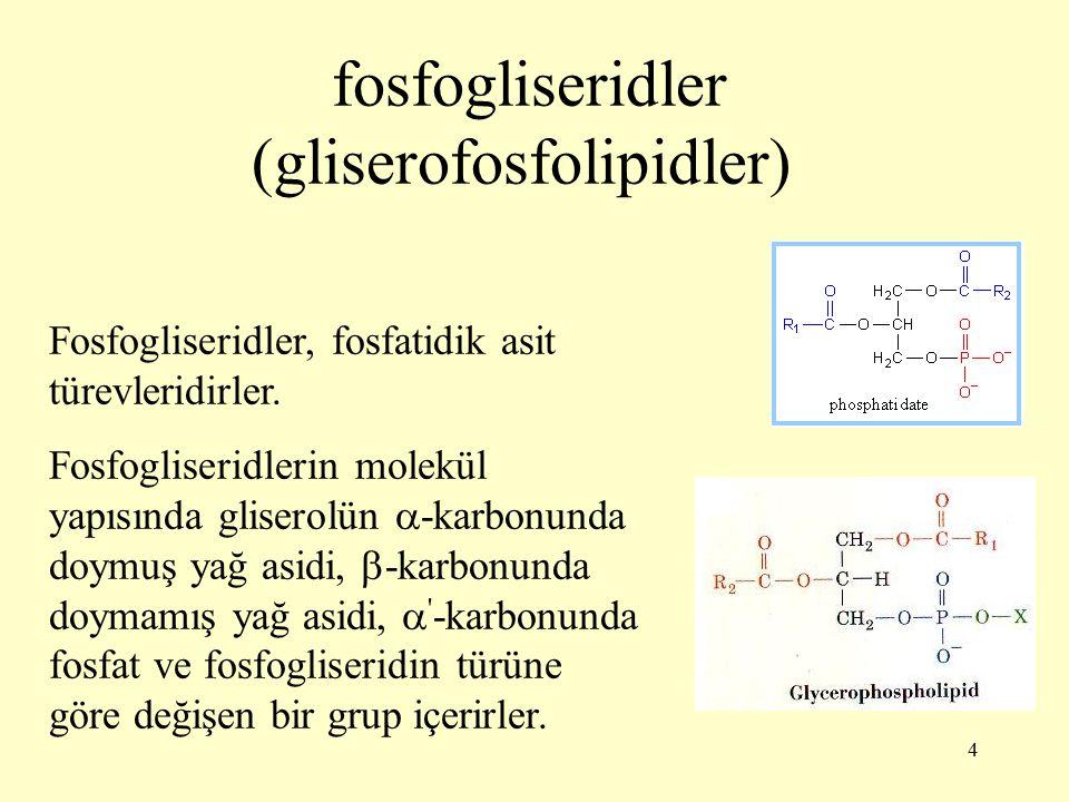 fosfogliseridler (gliserofosfolipidler)