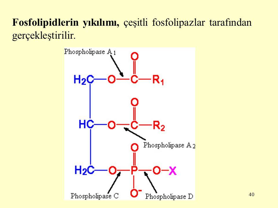 Fosfolipidlerin yıkılımı, çeşitli fosfolipazlar tarafından gerçekleştirilir.