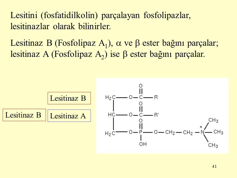 Lesitini (fosfatidilkolin) parçalayan fosfolipazlar, lesitinazlar olarak bilinirler.