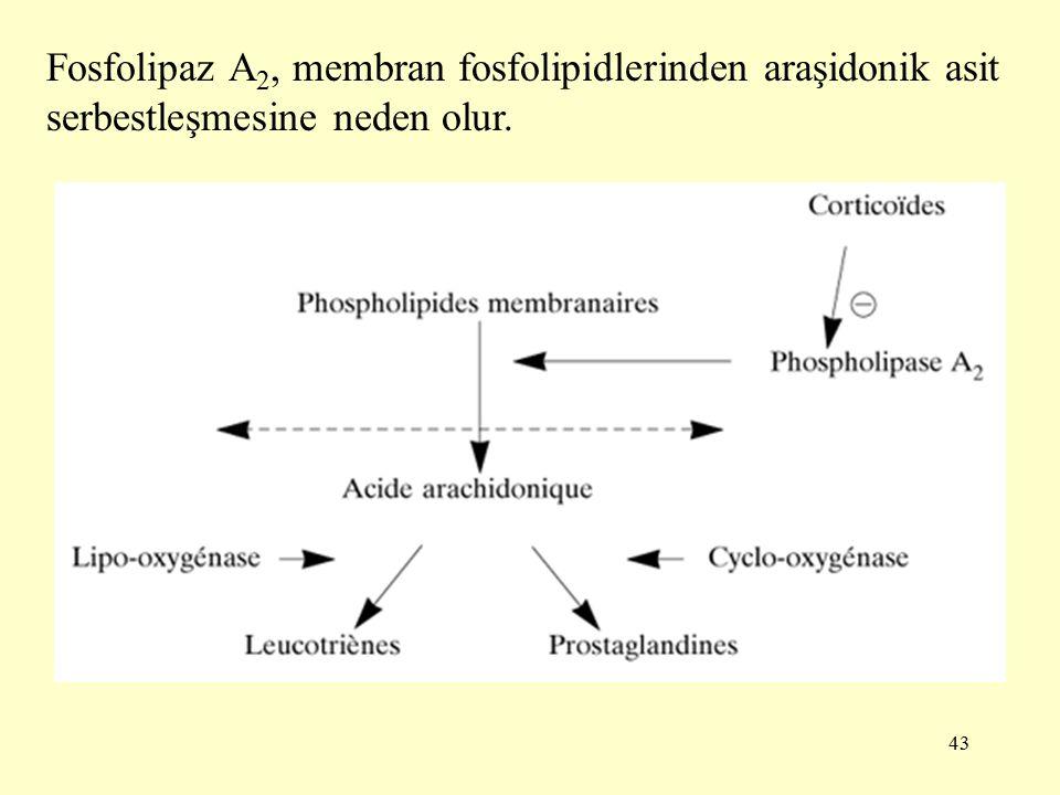 Fosfolipaz A2, membran fosfolipidlerinden araşidonik asit serbestleşmesine neden olur.