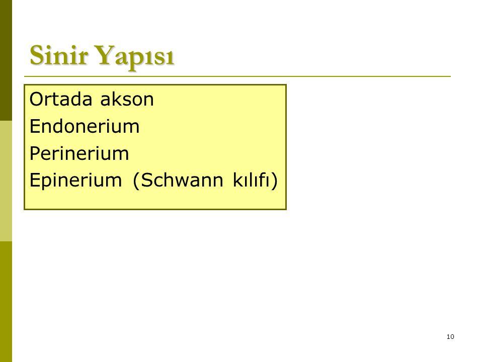 Sinir Yapısı Ortada akson Endonerium Perinerium