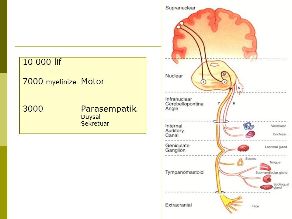 10 000 lif 7000 myelinize Motor 3000 Parasempatik Duysal Sekretuar