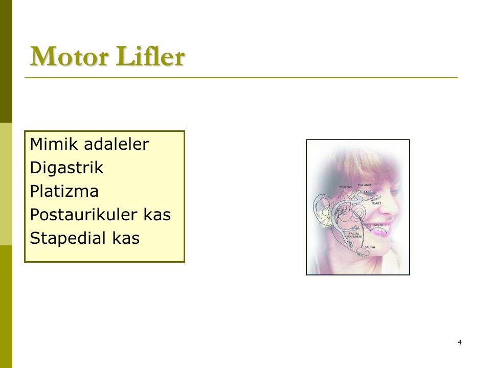 Motor Lifler Mimik adaleler Digastrik Platizma Postaurikuler kas
