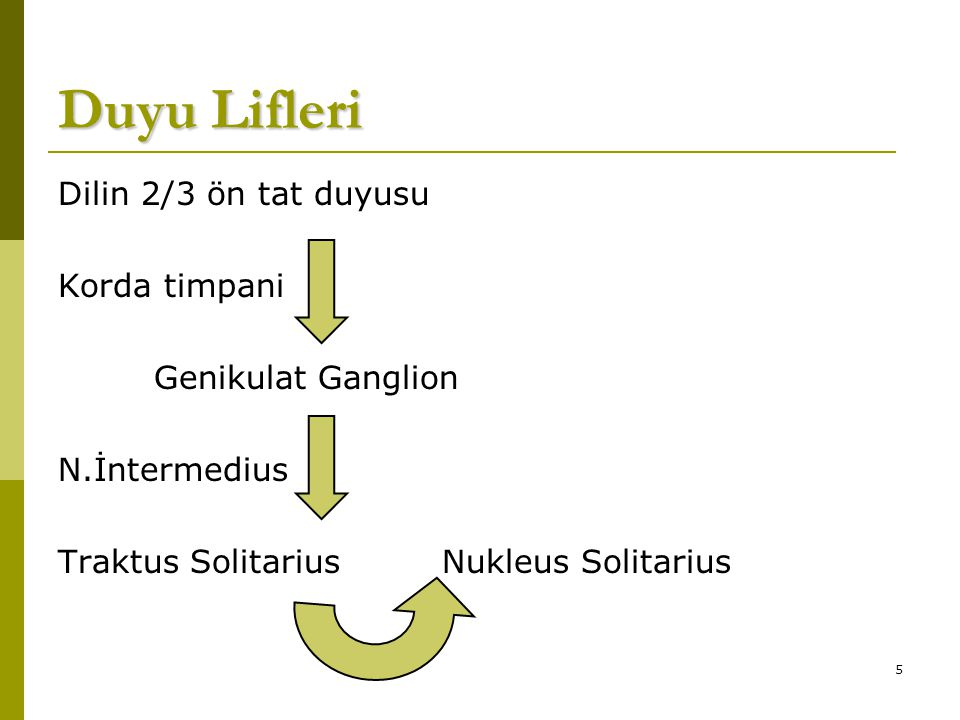 Duyu Lifleri Dilin 2/3 ön tat duyusu Korda timpani Genikulat Ganglion