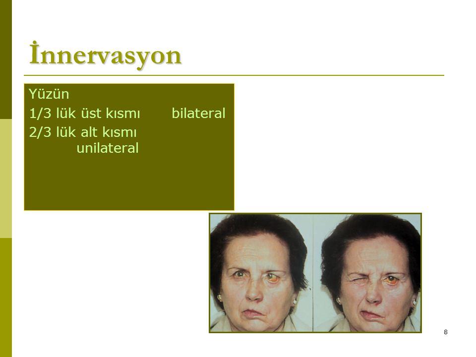 İnnervasyon Yüzün 1/3 lük üst kısmı bilateral