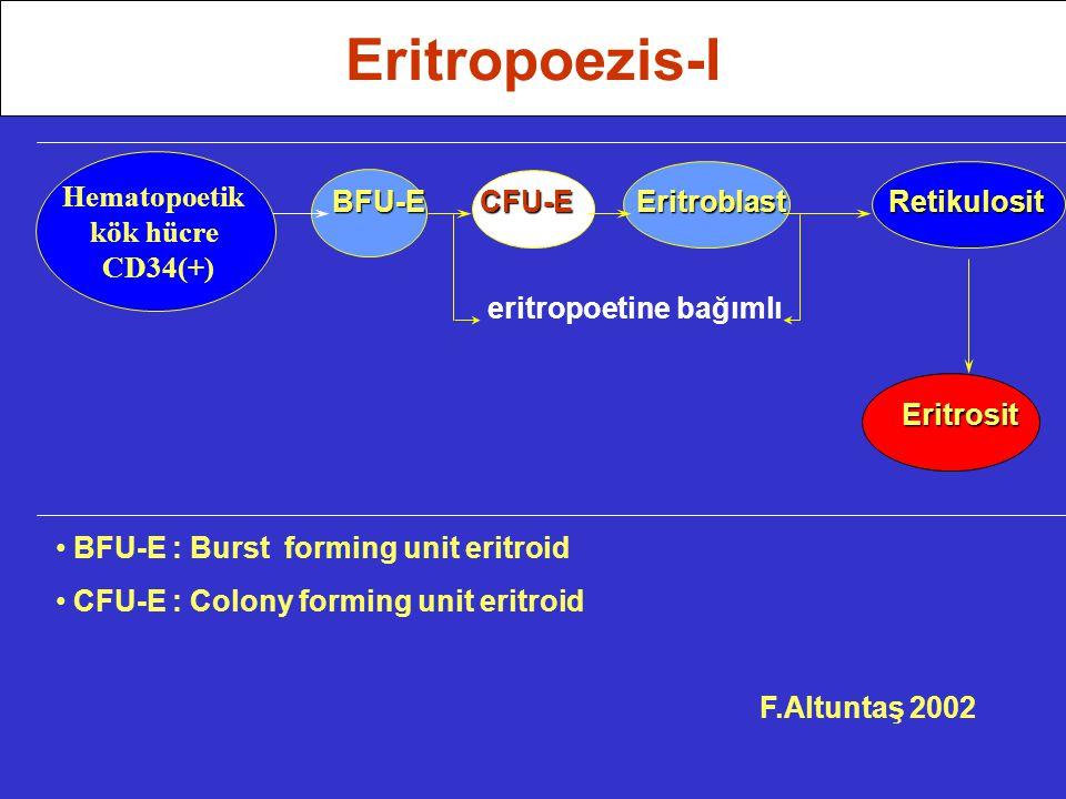 Eritropoezis-I Hematopoetik BFU-E CFU-E Eritroblast Retikulosit