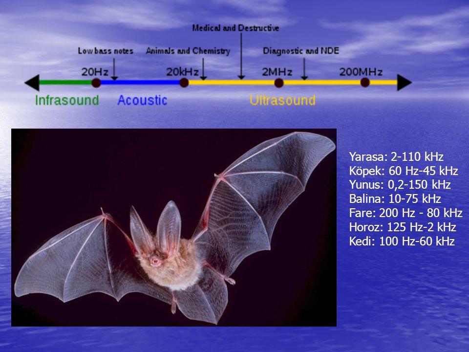 Yarasa: 2-110 kHz Köpek: 60 Hz-45 kHz. Yunus: 0,2-150 kHz. Balina: 10-75 kHz. Fare: 200 Hz - 80 kHz.