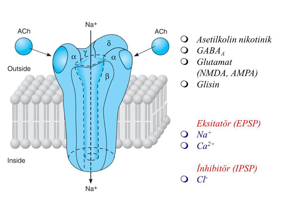 Asetilkolin nikotinik
