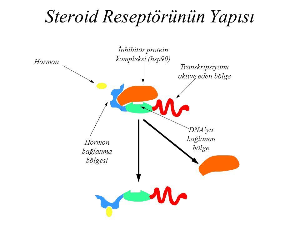Steroid Reseptörünün Yapısı