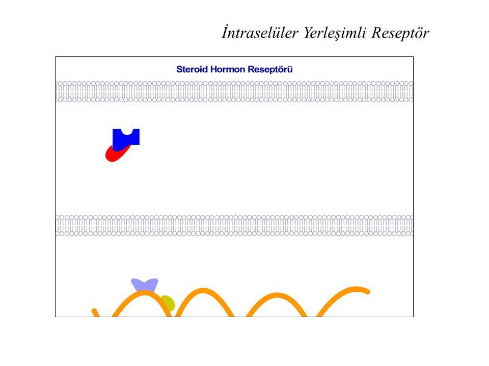 İntraselüler Yerleşimli Reseptör
