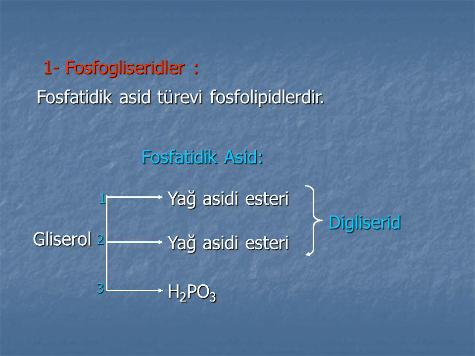 Fosfatidik asid türevi fosfolipidlerdir.