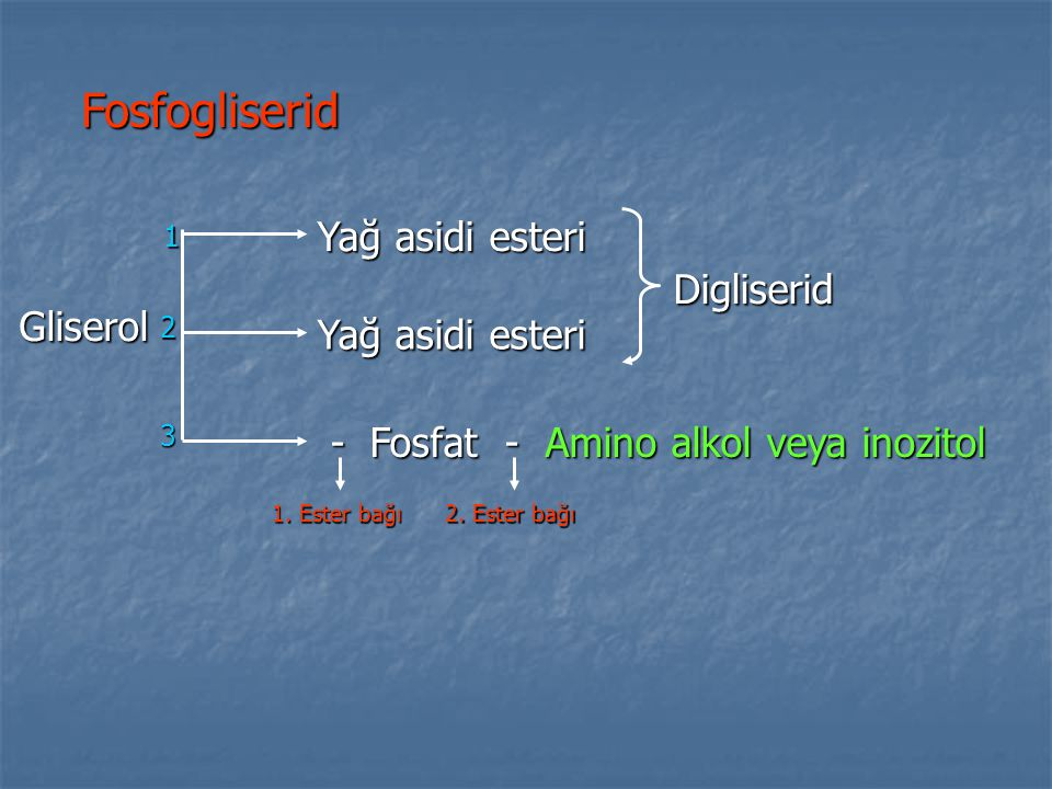 Fosfogliserid Yağ asidi esteri Digliserid Gliserol