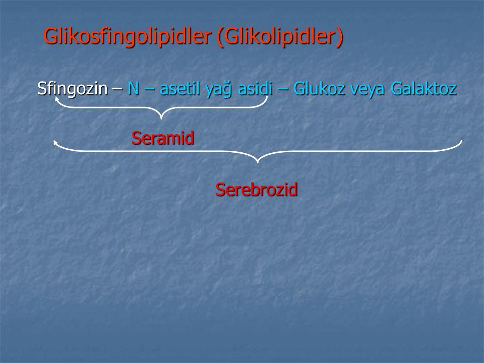 Sfingozin – N – asetil yağ asidi – Glukoz veya Galaktoz