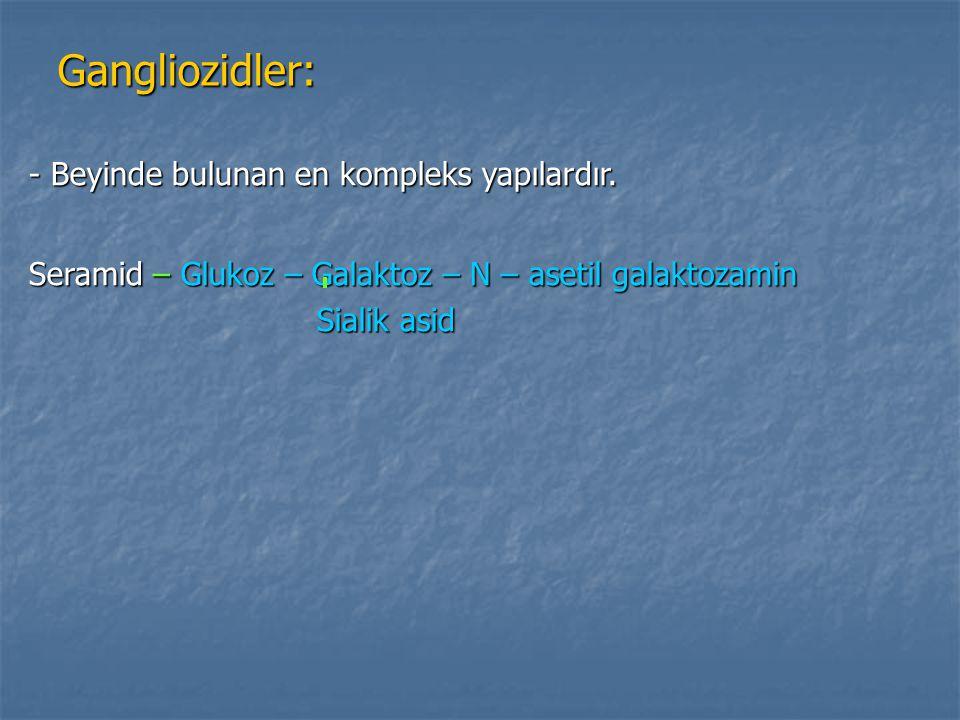 Gangliozidler: - Beyinde bulunan en kompleks yapılardır.