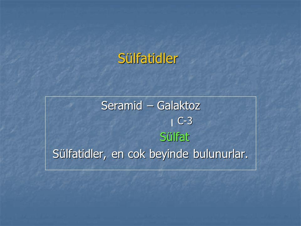 Seramid – Galaktoz C-3 Sülfat Sülfatidler, en cok beyinde bulunurlar.
