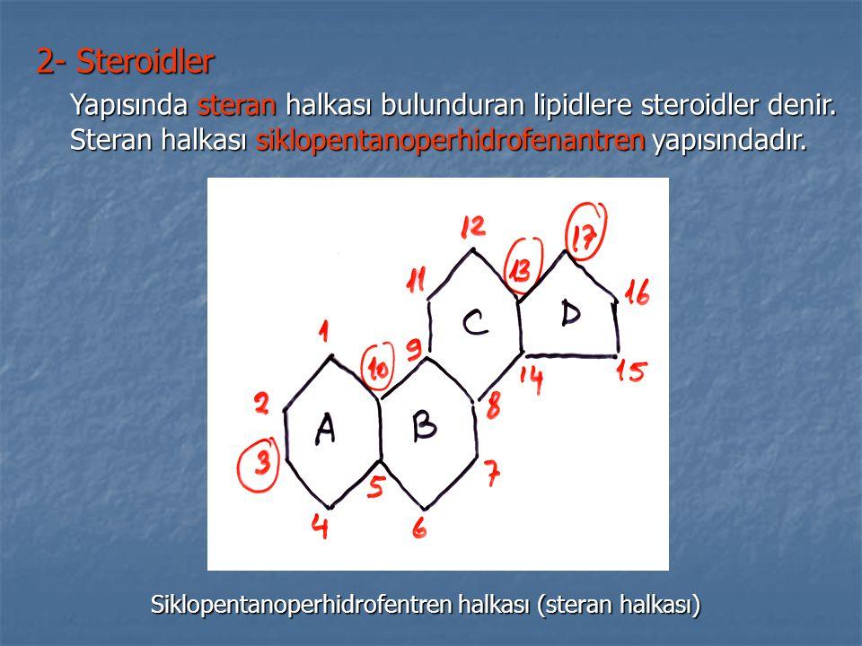 2- Steroidler Yapısında steran halkası bulunduran lipidlere steroidler denir. Steran halkası siklopentanoperhidrofenantren yapısındadır.