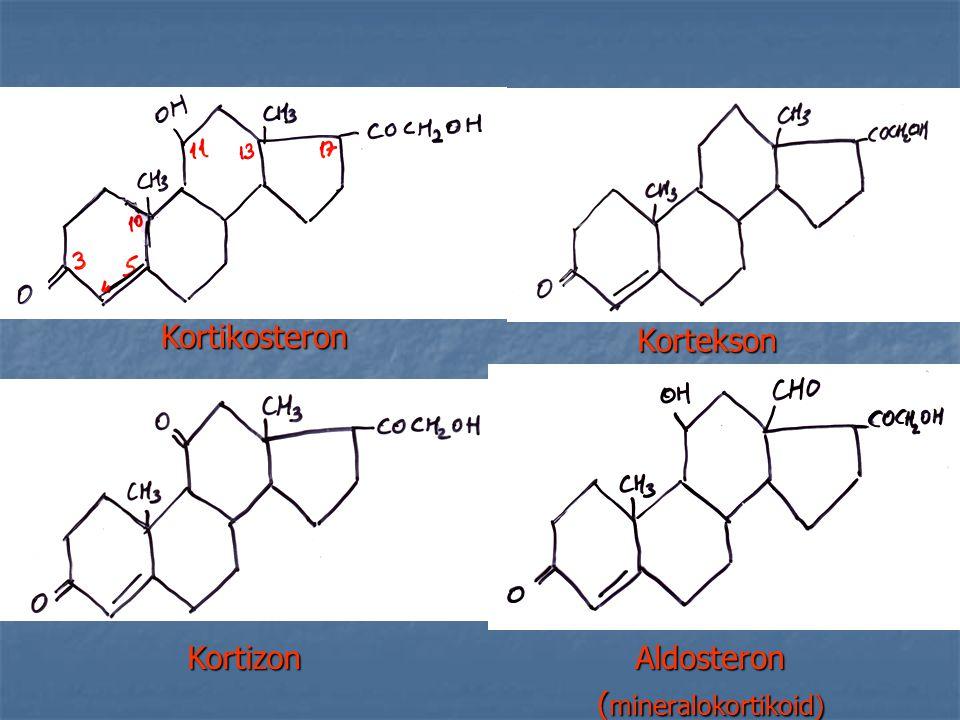 Kortikosteron Kortekson Kortizon Aldosteron (mineralokortikoid)