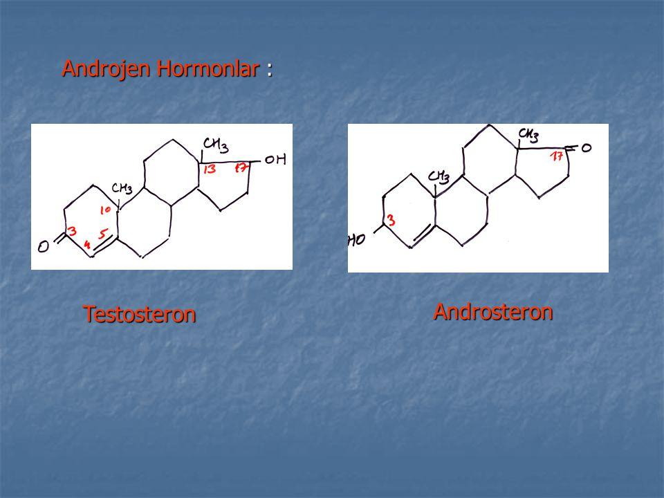 Androjen Hormonlar : Testosteron Androsteron