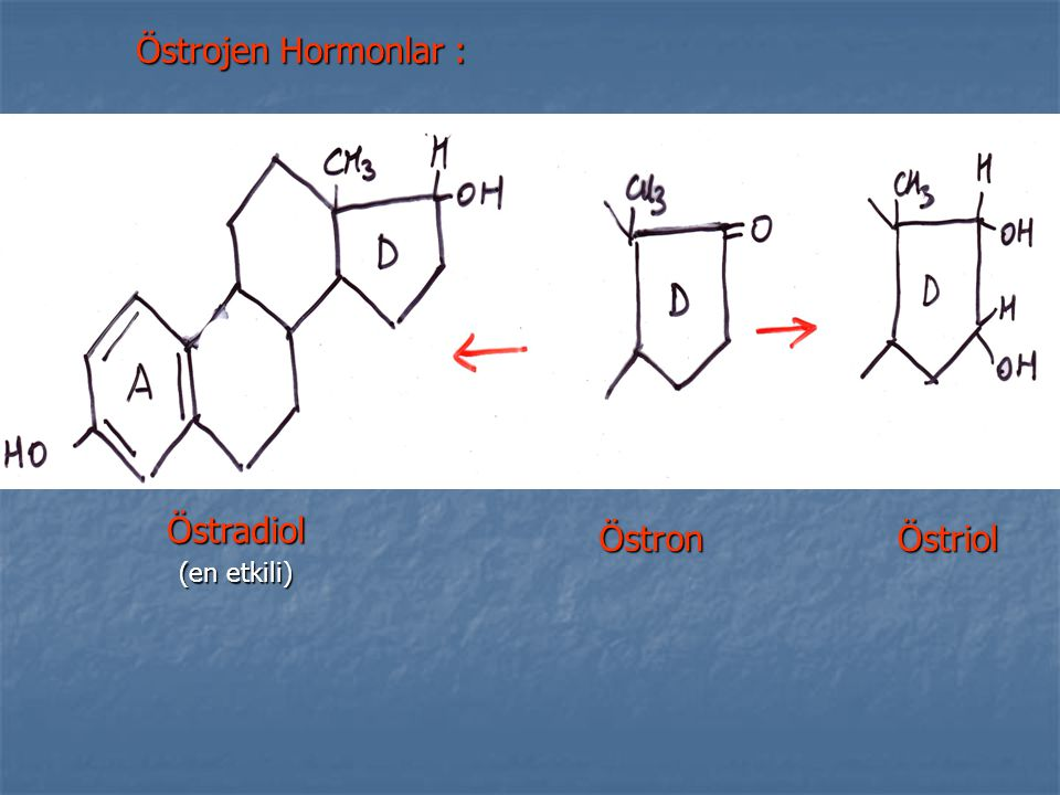 Östrojen Hormonlar : Östradiol (en etkili) Östron Östriol