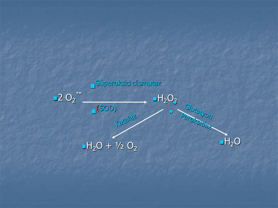 Süperoksid dismutaz (SOD) 2 O2.- H2O2 H2O H2O + ½ O2 Glutatyon