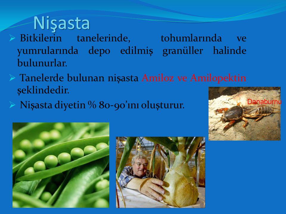 Nişasta Bitkilerin tanelerinde, tohumlarında ve yumrularında depo edilmiş granüller halinde bulunurlar.