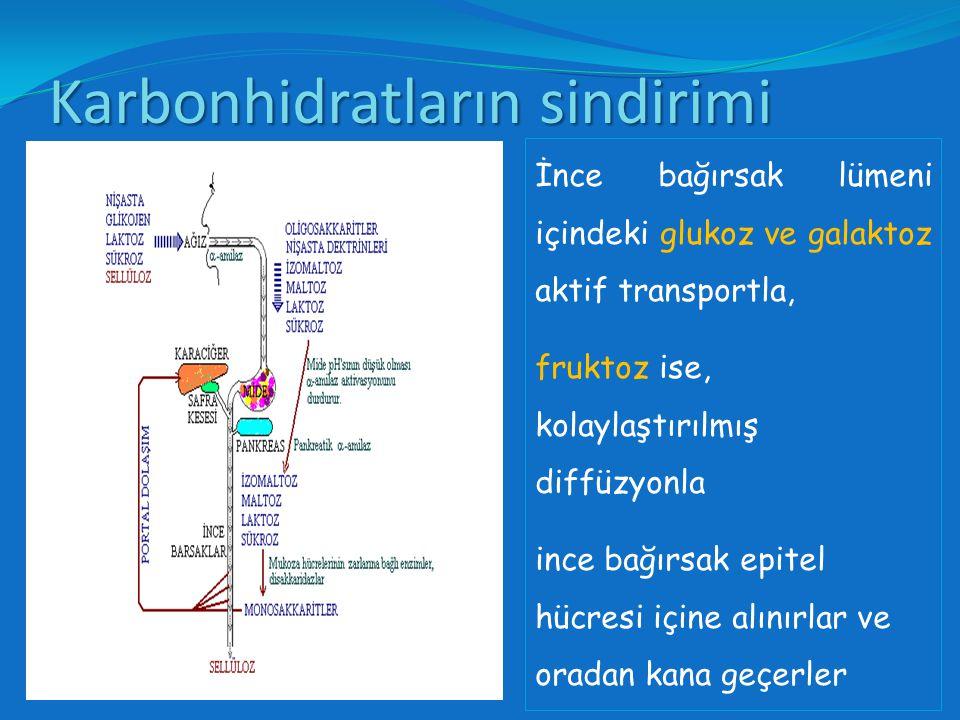 Karbonhidratların sindirimi