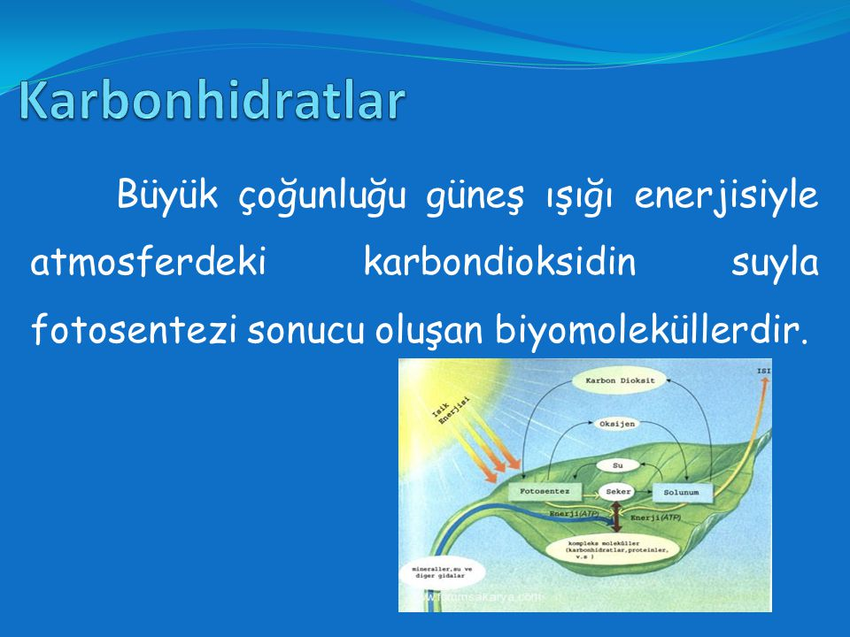 Karbonhidratlar Büyük çoğunluğu güneş ışığı enerjisiyle atmosferdeki karbondioksidin suyla fotosentezi sonucu oluşan biyomoleküllerdir.
