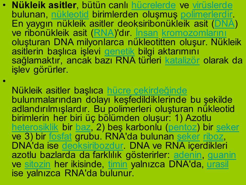 Nükleik asitler, bütün canlı hücrelerde ve virüslerde bulunan, nükleotid birimlerden oluşmuş polimerlerdir. En yaygın nükleik asitler deoksiribonükleik asit (DNA) ve ribonükleik asit (RNA) dır. İnsan kromozomlarını oluşturan DNA milyonlarca nükleotitten oluşur. Nükleik asitlerin başlıca işlevi genetik bilgi aktarımını sağlamaktır, ancak bazı RNA türleri katalizör olarak da işlev görürler.