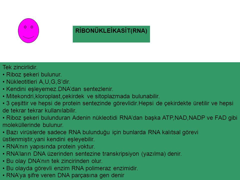 RİBONÜKLEİKASİT(RNA)