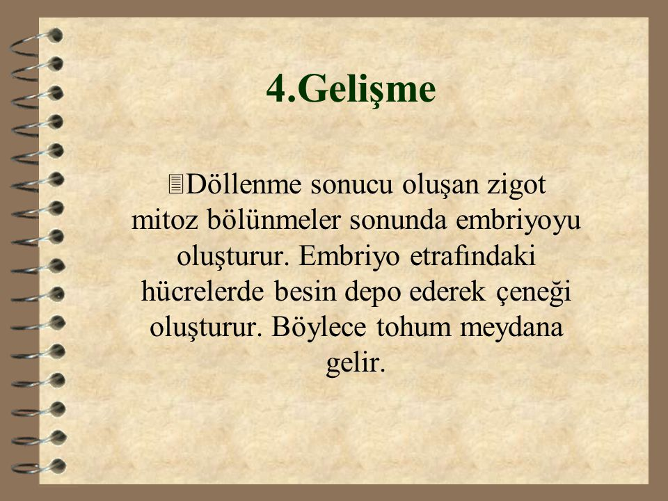 4.Gelişme