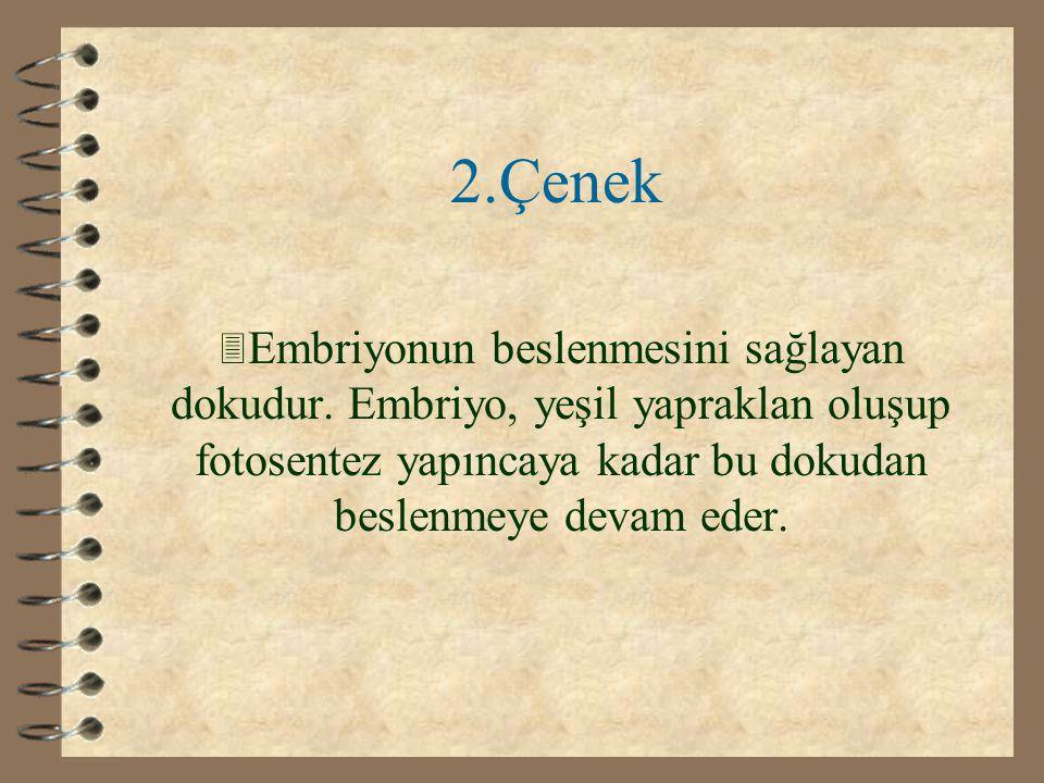 2.Çenek Embriyonun beslenmesini sağlayan dokudur.