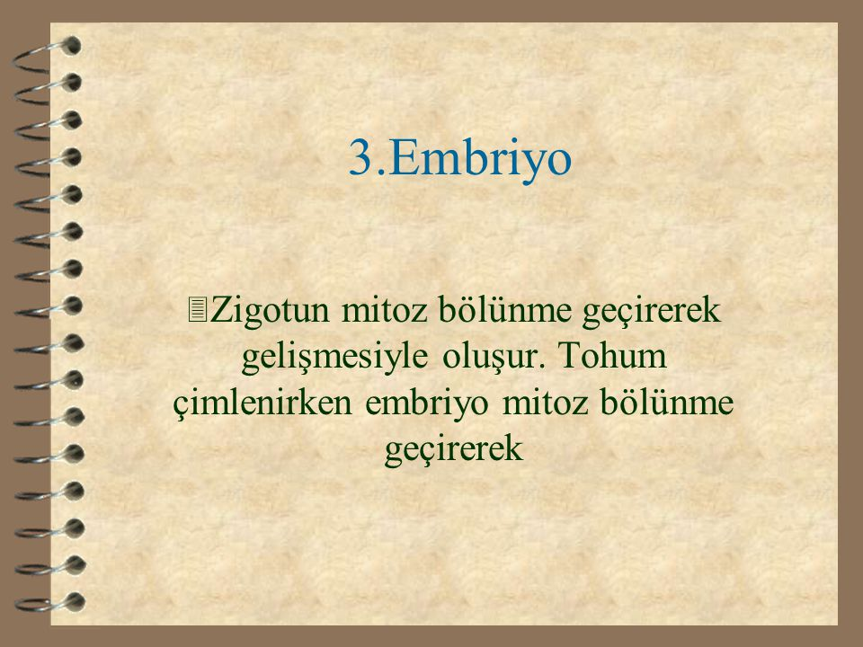 3.Embriyo Zigotun mitoz bölünme geçirerek gelişmesiyle oluşur.