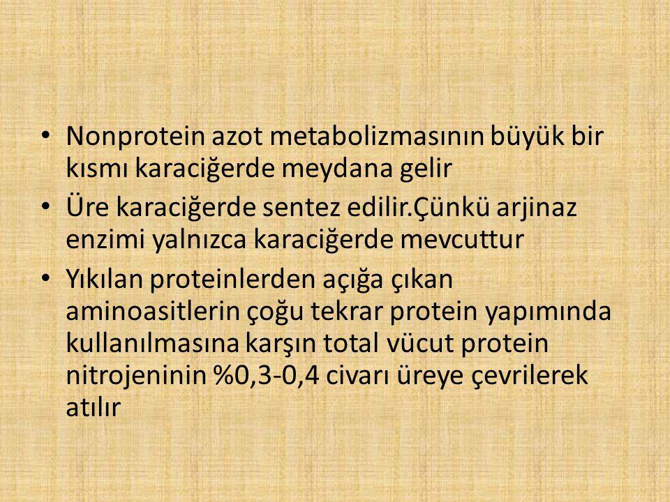 Nonprotein azot metabolizmasının büyük bir kısmı karaciğerde meydana gelir