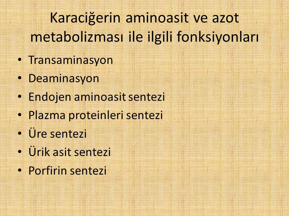 Karaciğerin aminoasit ve azot metabolizması ile ilgili fonksiyonları