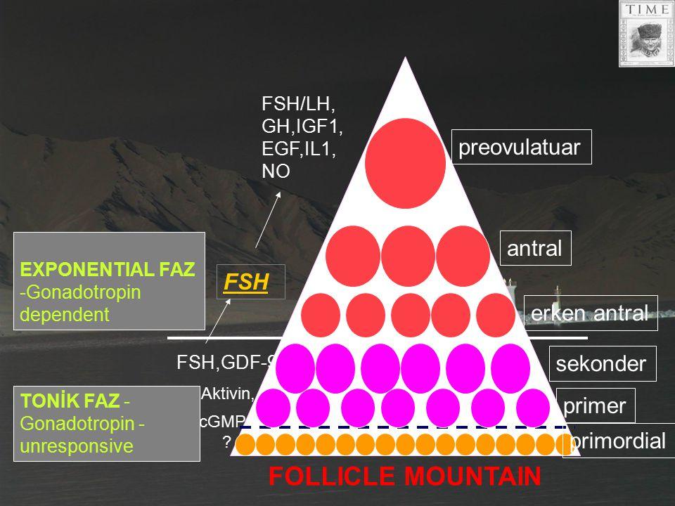 FOLLICLE MOUNTAIN preovulatuar antral FSH erken antral sekonder primer
