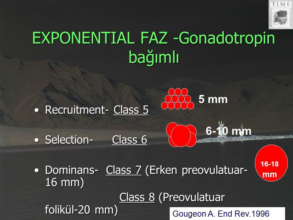 EXPONENTIAL FAZ -Gonadotropin bağımlı