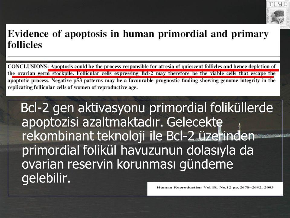 Bcl-2 gen aktivasyonu primordial foliküllerde apoptozisi azaltmaktadır