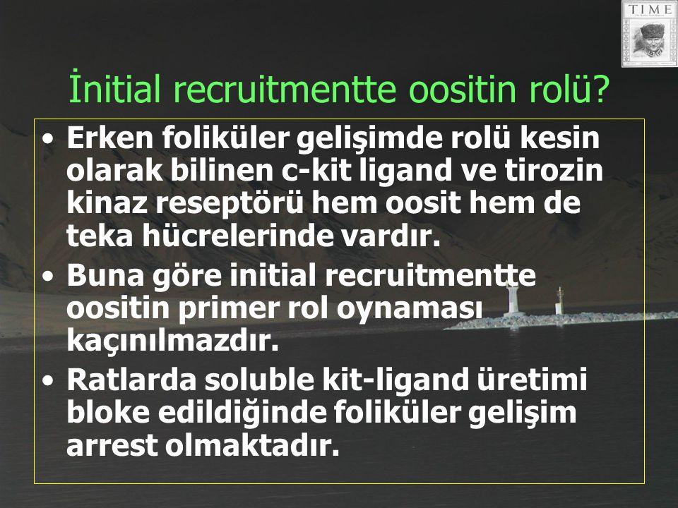İnitial recruitmentte oositin rolü